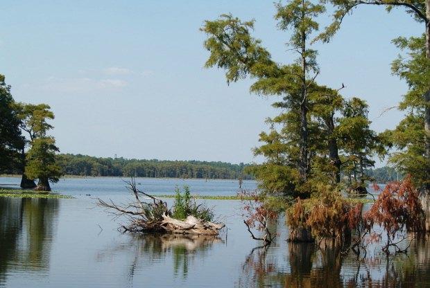 Caddo Lake scenery in Sept.